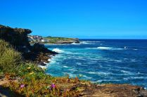Coogee cliffs