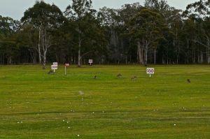 Kangaroos all over the driving range