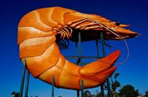 The giant prawn!