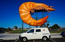 Giant prawn with Moby