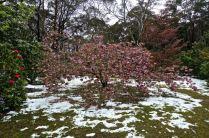 Rhododendron gardens, Blackheath