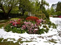 Snow in Blue Mountains