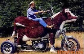 funny bike3
