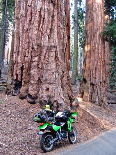 Sequoia N.P.