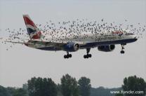 planebirds