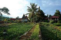 Liberta Homestay, Samosir Island